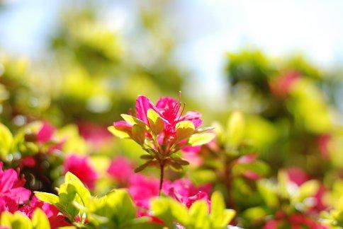 flower8-7.jpg