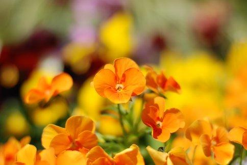 flower8-8.jpg