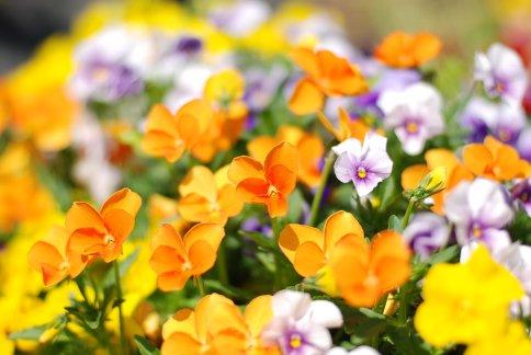 flower8-9.jpg