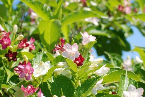 flower9-11.jpg