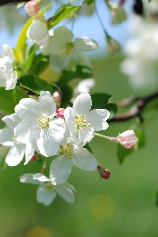 flower9-3.jpg