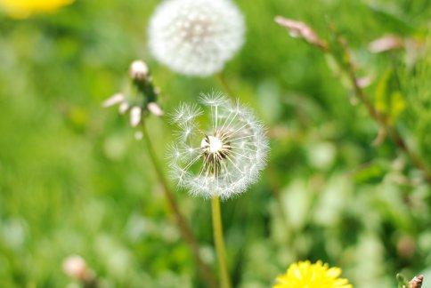 flower9-4.jpg