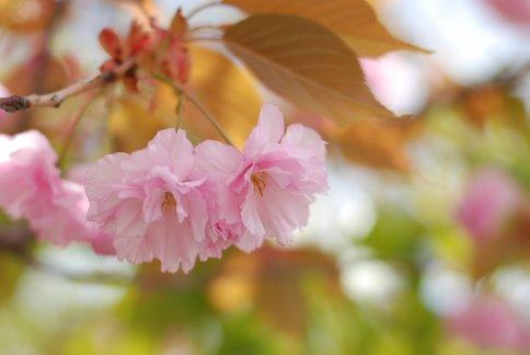 flower9-5.jpg
