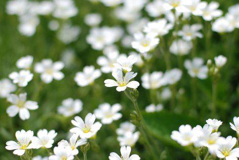 flower9-7.jpg