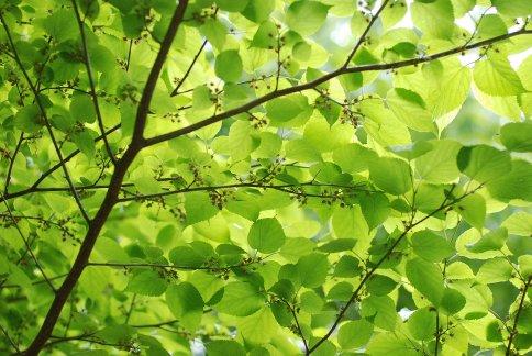 green9-3.jpg