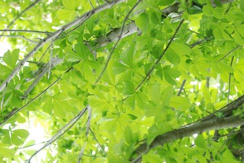 green9-4.jpg