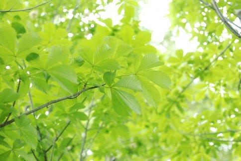 green9-5.jpg