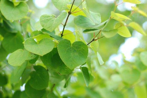 green9-6.jpg