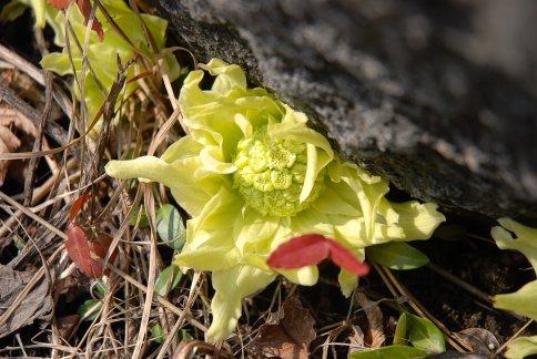 spring7-1.jpg