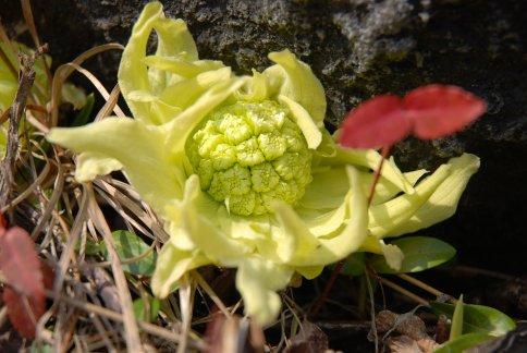 spring7-3.jpg