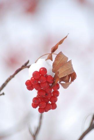 winter5-2.jpg