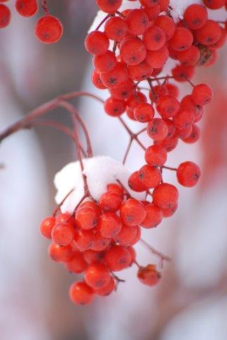 winter5-3.jpg