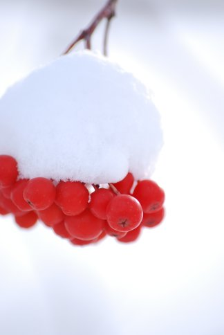 winter5-5.jpg