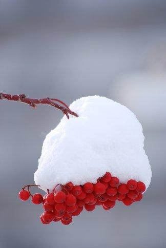 winter5-6.jpg