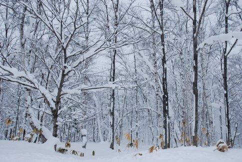 winter6-4.jpg