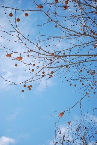 winter7-5.jpg