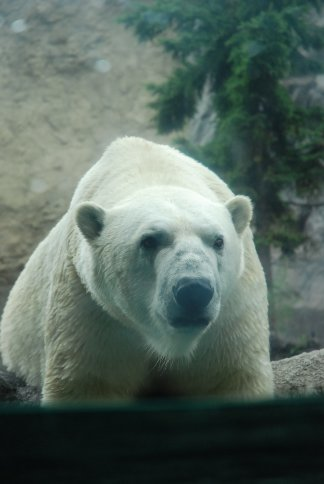 zoo10-3.jpg