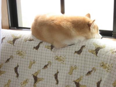 ななソファの上 窓
