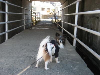 ラッキートンネルの中で