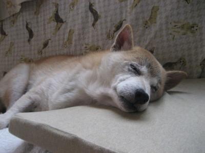 ナナの寝顔