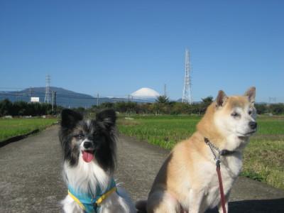 富士山とコラボ③