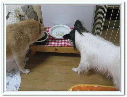 仲良くご飯☆