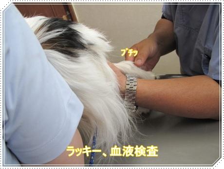 ラッキー血液検査