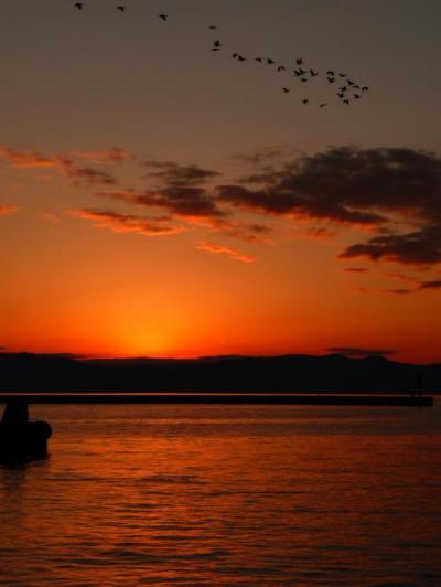 錦江湾の夕日(鳥も帰ります。。。)