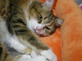 眠いです…