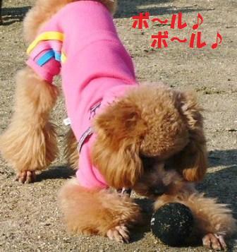ボール大好き♪