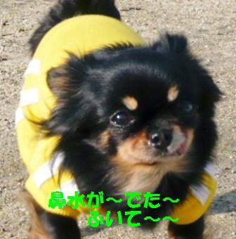 ぷっちゃん~♪
