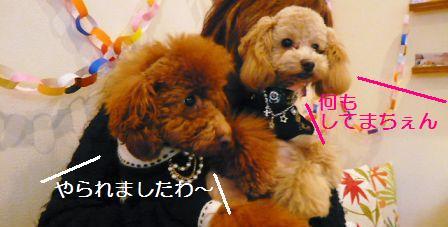 2008年02月12日_P1010554