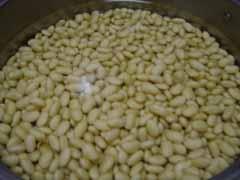 一日経って水分を含んだ大豆