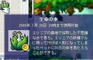 Maple0001_20081030231013.jpg