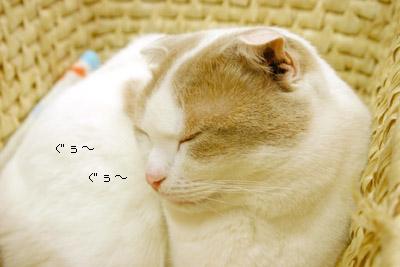 20060126213546.jpg