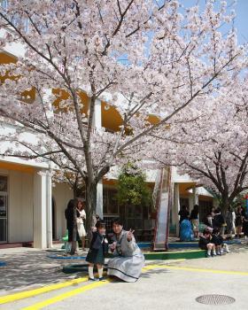 母と桜の木の下で