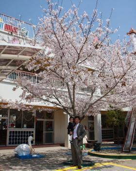 父と桜の木の下で