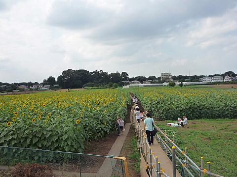 himawari8803.jpg