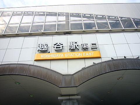 koshiga110.jpg