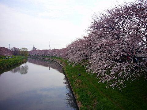 koshiga115.jpg