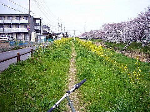 koshiga125.jpg
