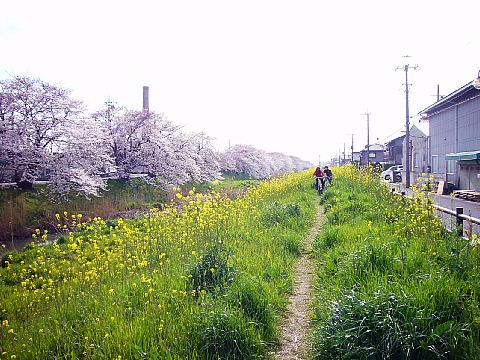 koshiga126.jpg