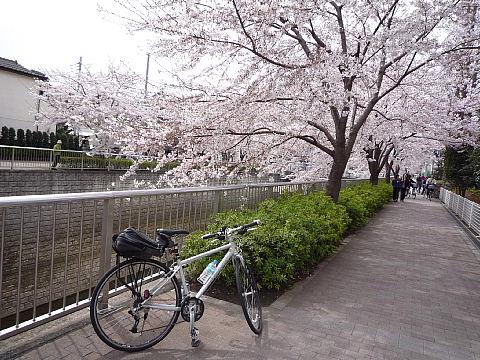 shakujiiq110.jpg