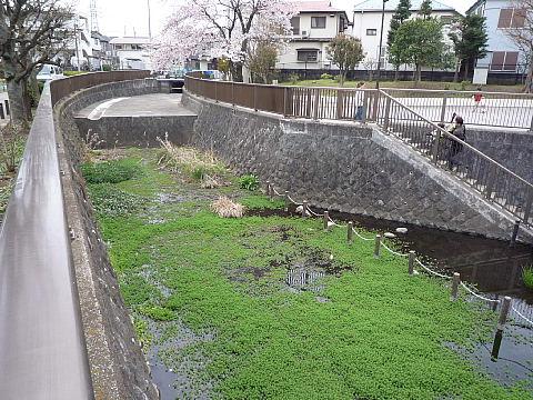 shakujiiq121.jpg