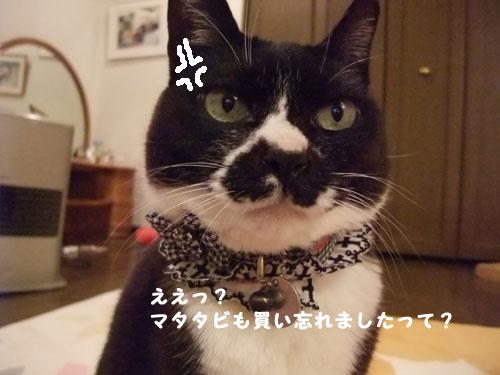 20090323_6.jpg