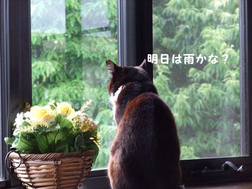 20090615_2.jpg
