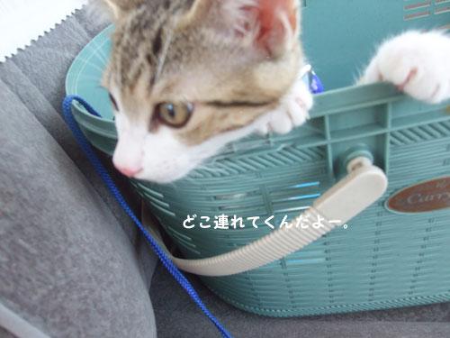 20090812_5.jpg