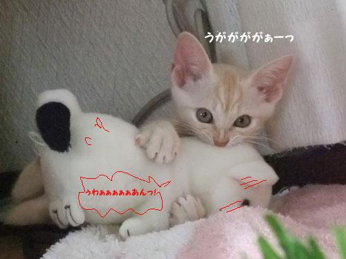 20090824_6.jpg