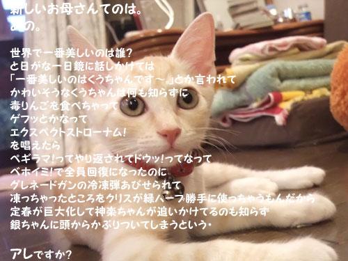 20090825_2.jpg