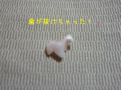 歯が抜けちゃった!